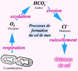 Un processus de formation du sel